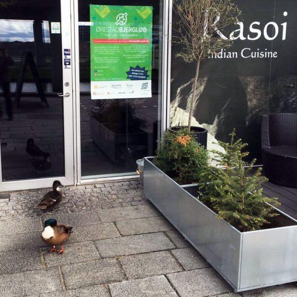 Højbed Plus fra Land Højbede ved restaurant Rasoi i Ørestad