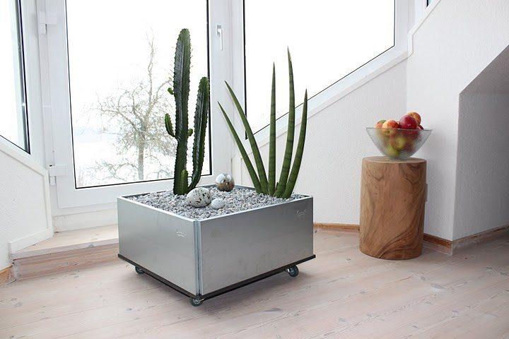 kaktus i mobilt højbed