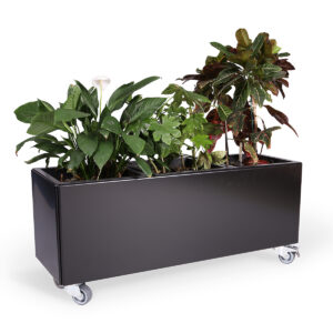 Land Black 40x120 cm plantekasse med grå hjul tilvalgt og vandingsindsatser fra Land Højbede