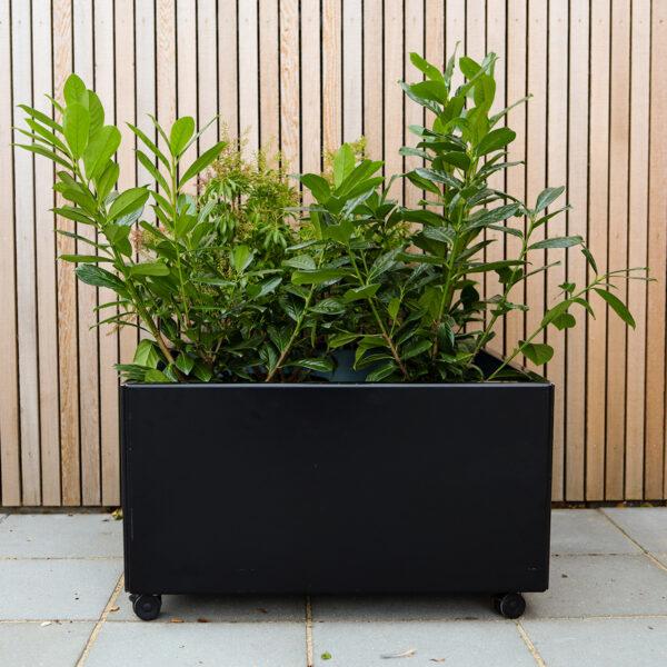 Land Black kvadratisk plantekasse med hjul foran cedertræsfacade med stedsegrønt Land Højbede