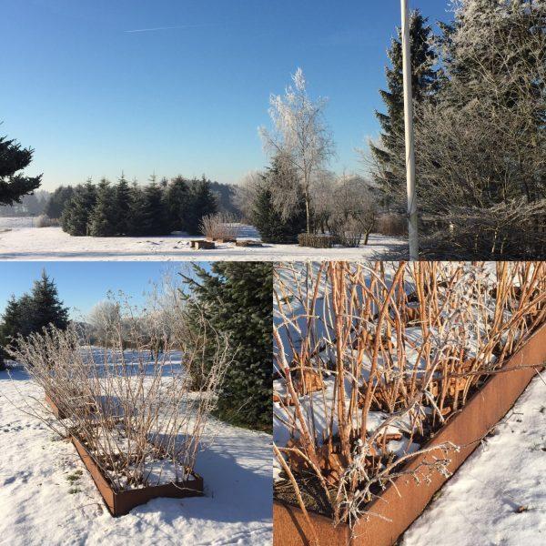 Store aflange højbede fra Land Højbede med hindbær i sneen