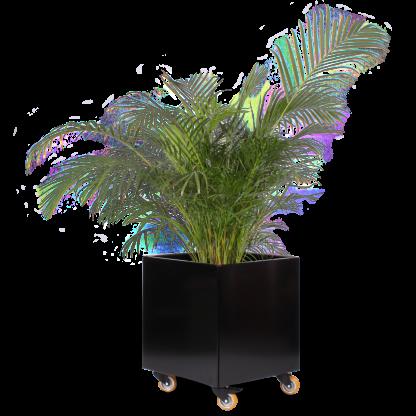 Blomsterkumme med robuste hjul fra Land Højbede, 60x60x60 cm i RAL 9005 Dybsort