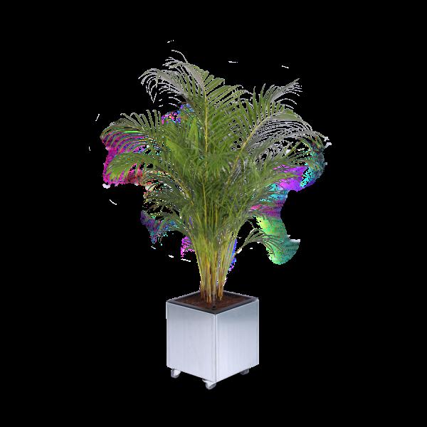 Land Modern 40 x 40 cm mobil plantekasse med guldpalme