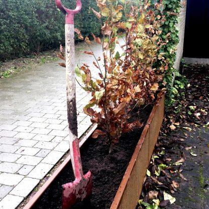 Forlænget plantekumme fra Land Højbede som ramme om bøgehæk