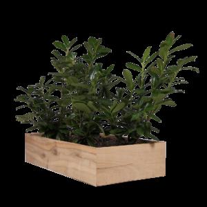 Land Wood højbed i egetræ fra Land Højbede til køkkenhave blomster og buske