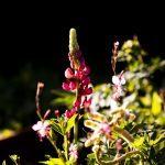 Slap af med haveambitionerne og nyd naturen
