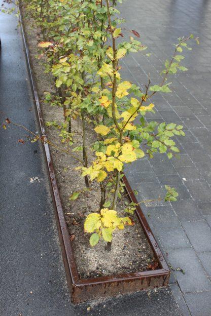 Plantekumme uden bund som rumdeler i byrummet
