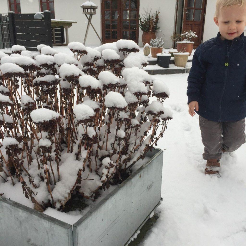 Mobile plantekasser i forhaven på en vinterdag i Nordjylland