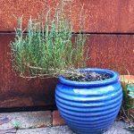 Et bed med flerårige spiselige planter på terrassen
